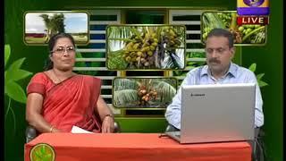കുളളൻ തെങ്ങ്- Kullan Thengu - Part 2
