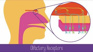 CH06-SENSORY SYSTEMS-PART01-INTRODUCTION – RECEPTORS