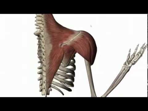 Röntgen des Beckens Gelenke