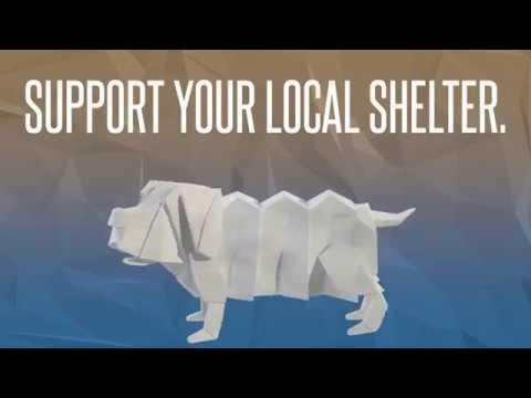Video: Washington County/Johnson City Animal Shelter, September 21