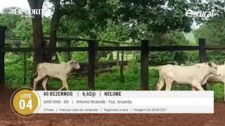 40 BEZERROS NELORE
