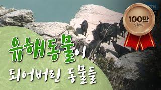 [녹색의 꿈] 유해동물이 된 동물들, 원인은 사람? / YTN 사이언스