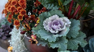 Planting Fall Containers 🍂(Pt 1) // Garden Answer