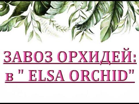 Чудесный ЗАВОЗ ОРХИДЕЙ в 'Elsa Orchid',ОРХИДЕИ ПОЧТОЙ,Самара.О РОЗЫГРЫШЕ орхидей.