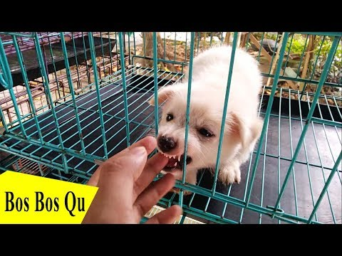 Murah banget! Harga Anjing Lengkap  Di Pasar Satwa PASTY Kota Jogja