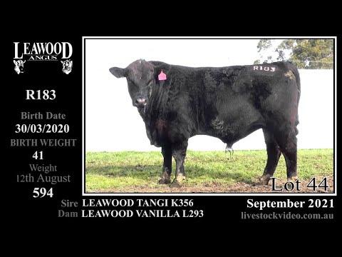 LEAWOOD TANGI R183