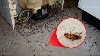 How to Get Rid of Roaches for Good (Fast & Naturally)