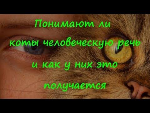 ПОНИМАЮТ ЛИ КОТЫ ЧЕЛОВЕЧЕСКУЮ РЕЧЬ и как у них это получается DO CATS UNDERSTAND HUMAN SPEECH