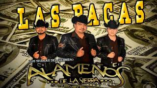 Las Pacas - Los Alameños De La Sierra (Estreno En Vivo 2018)