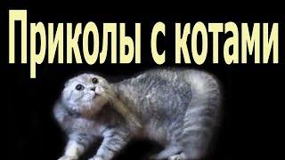 Приколы с котами: приколы про котов и кошек