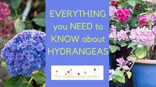 Hydrangeas - Everything You Need To Know About Growing Hydrangeas In Your Garden