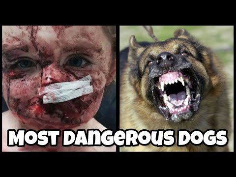 Top 10 DANGEROUS DOG BREEDS In The World 2018