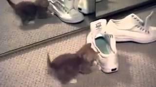 Котенок зеркало и обувь копы Котята