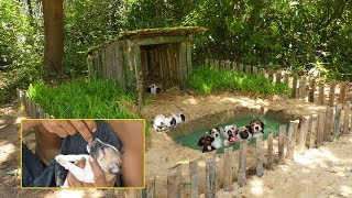 Rescues Collect abandoned Puppies Build Dog House & Pools