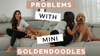 Common Problems With Puppies | F1B Mini Goldendoodle Issues