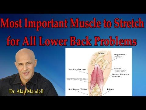 Lensemble des exercices sur les muscles du ventre et la taille