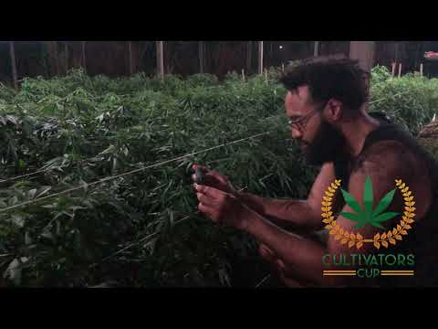 Jamaican Cannabis Garden