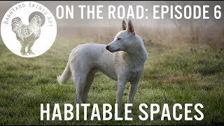 "BARNYARD SAINTS ART, ON THE ROAD: ""HABITABLE SPACES"""