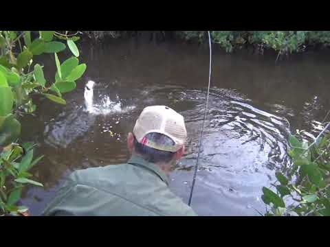 Preview: Fly Fishing the Everglades
