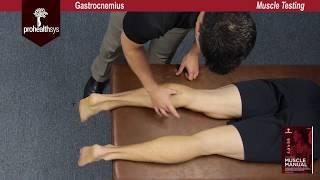 Gastrocnemius Muscle Test Vizniak