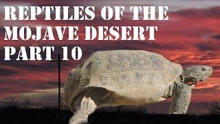 Reptiles of the Mojave Desert Part 10, The Desert Tortoise