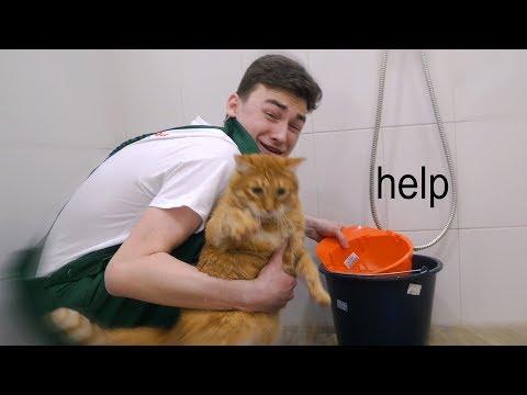 мою своего кота *ЧТО-ТО ПОШЛО НЕ ТАК*
