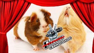 6 ПЕСЕН В ОДНОМ ВИДЕО: Кастинг на СвиноГолос / SvinkiShow
