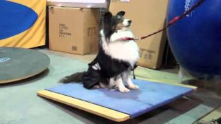 Sign up now for our new Canine Fitness Class