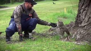 Veja a reação da coruja ao ser salva...