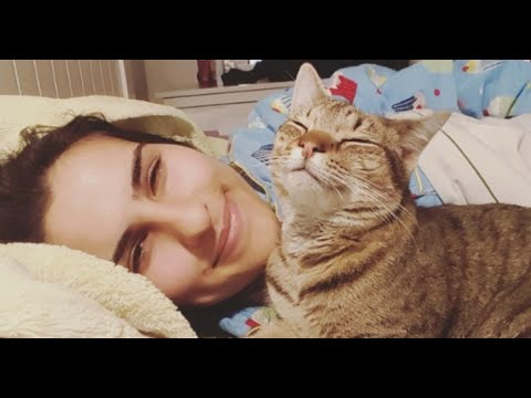 Cats Can Get Attached to Their Humans Even More Than Dogs, and It's Science That Pr
