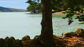 Gentle WAVES at Lake 8 Hours, Gentle Wave Sounds, Insect sounds - Relaxing, Sleeping, Studying, ASMR