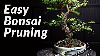FAST & EASY Pruning Bonsai Trees for Beginners - How to Prune a Chinese Elm Bonsai Tree