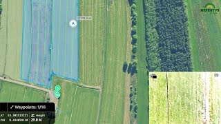 Early detection of mice damage in grassland with drones
