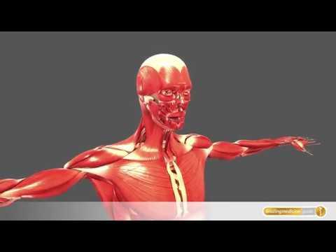 Aufwachen Rückenschmerzen