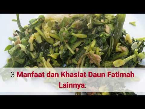 Video 13 Manfaat Rumput Fatimah Untuk Kesehatan Wanita