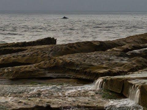Pentax 645 sunrise seascape (+whale watching!)