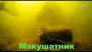 Как сазан клюет под водой
