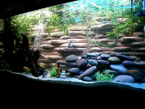 Can i put some plants in an african cichlid aquarium for Fish tank riddle