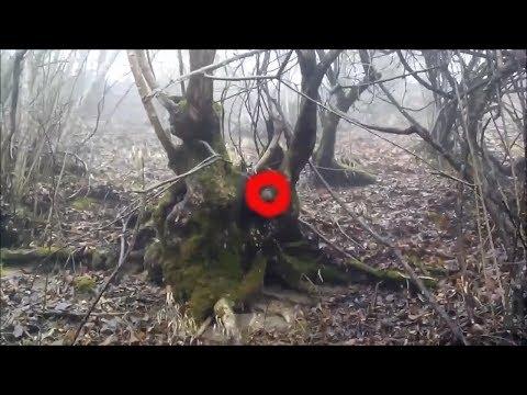 Странный шар обнаружен на дереве в лесу. неопознанное. странное место в лесу. находка в лесу