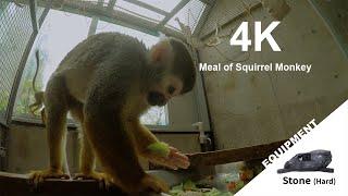 【Animal FPV】4K Meal of Squirrel Monkey リスザルの忙しいお食事【アニマルFPV】
