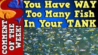 You Have Way Too Many Fish In Your Tank!! Comment of the week Ep. 3
