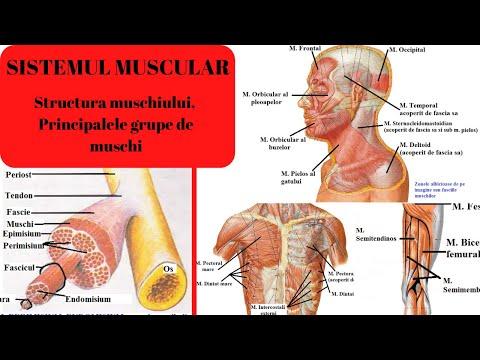 Potasiu și magneziu pentru dureri articulare