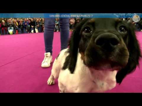 Voir la vidéo : Ring Canins du 02 mars 2017, partie 3