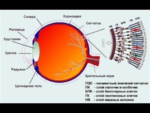 Новокузнецк центр коррекции зрения