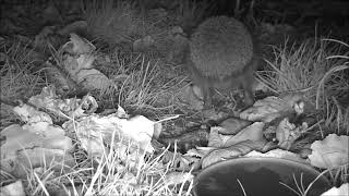 Wildlife Trail Camera - 20.11.2018