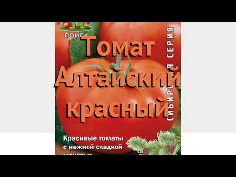 Томат обыкновенный Алтайский красный 🌿 обзор: как сажать, семена томата Алтайский красный
