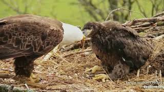 Decorah North Eagles,WTG DN9,Grab That Fish 5/16/19