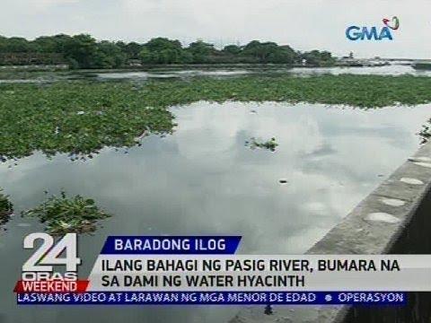 [GMA]  Ilang bahagi ng Pasig River, bumara na sa dami ng water hyacinth