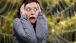 Боязнь пауков и сколопендр дома