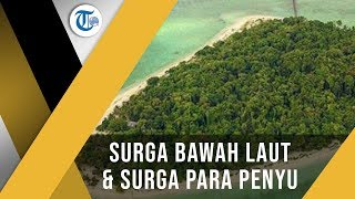 Pulau Sangalaki Kepulauan Derawan